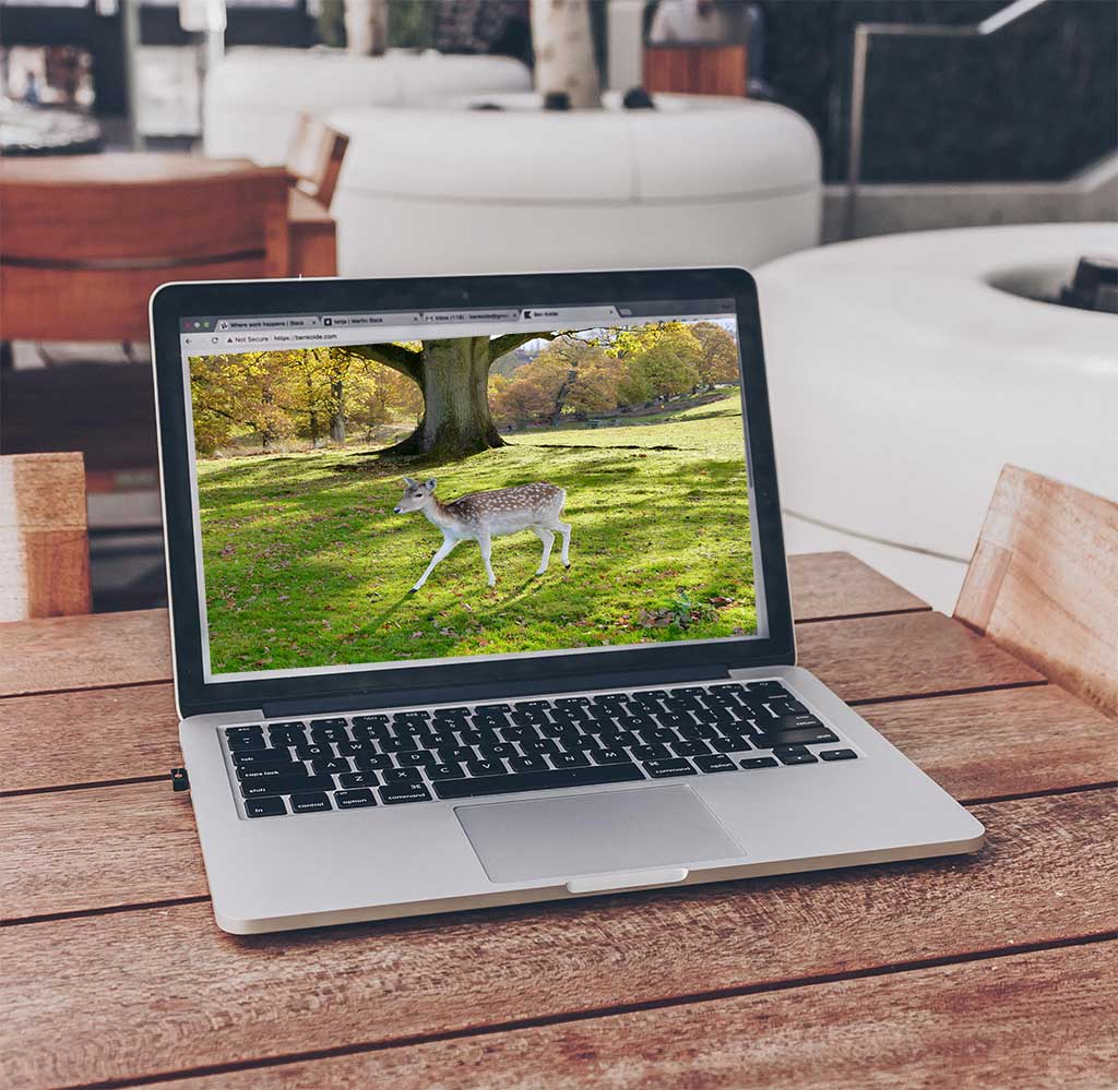 web design sevenoaks laptop and deer